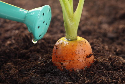 Carrot_Watering_Can