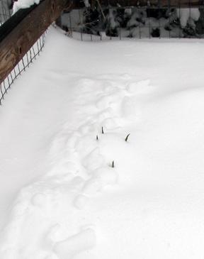 SnowOnions_032609