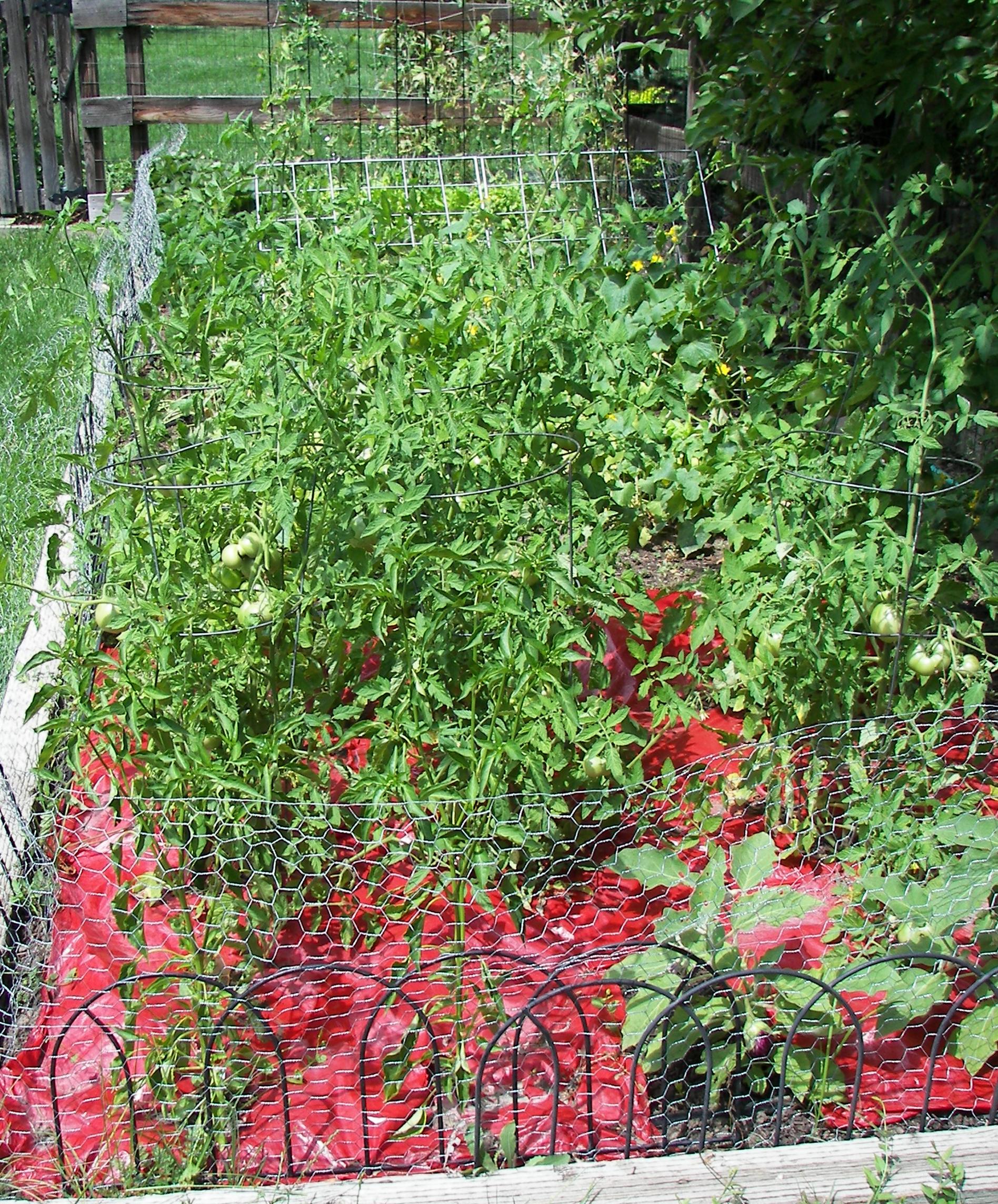 harvest time backyard ve able garden liz on food