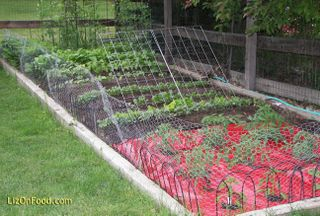 Vegetable Garden Red Mulch