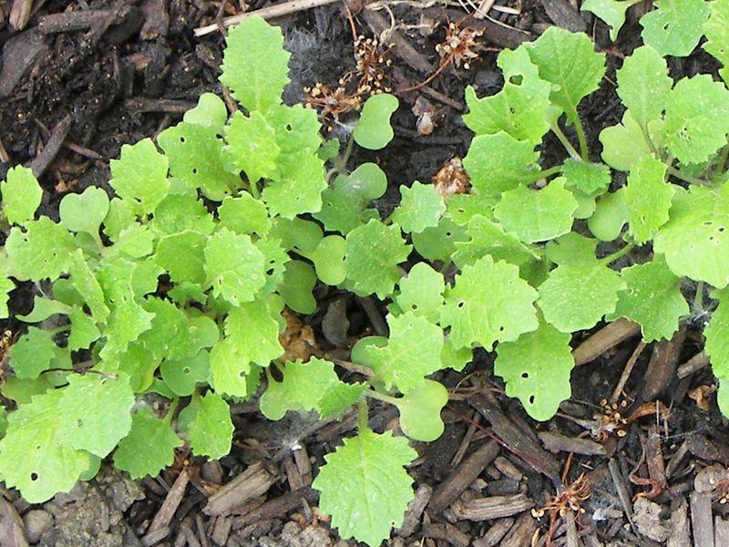 Garden June10007CRP